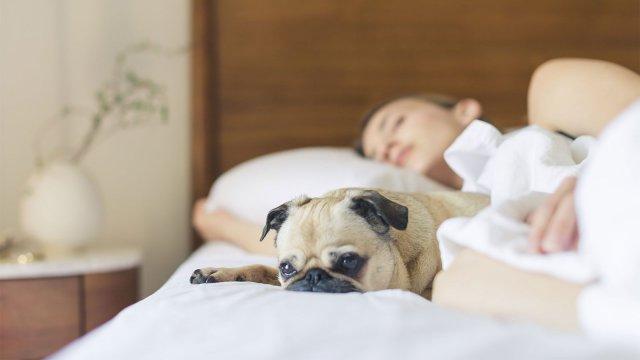 Capítulo I: A importância do sono
